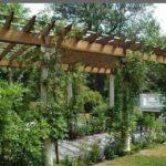 Pergola pour plante grimpante